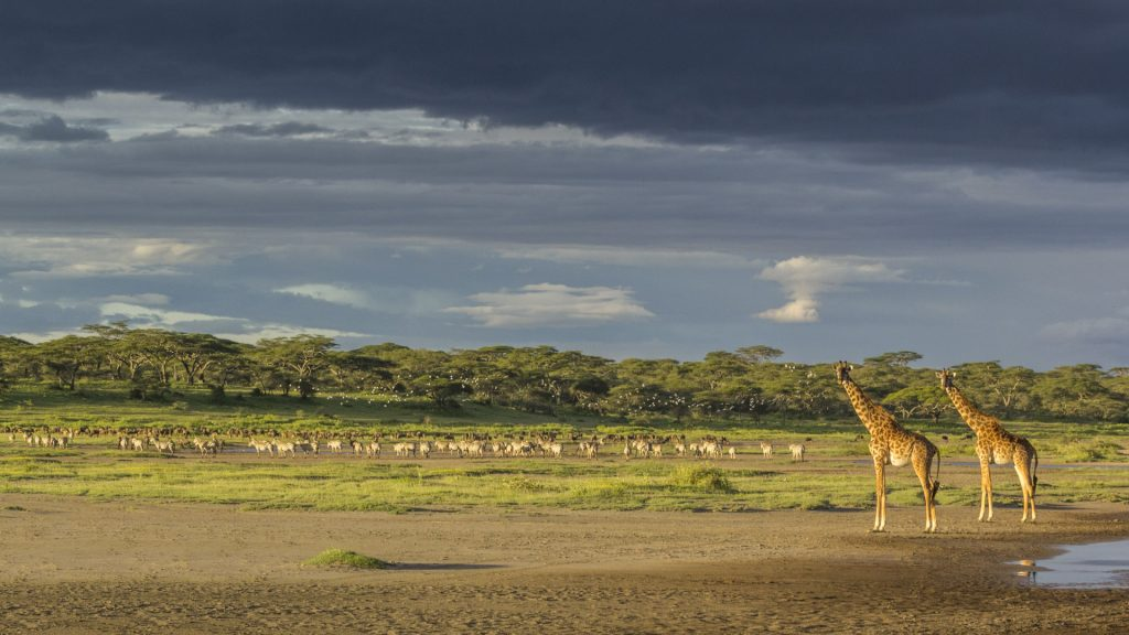 Chase Wells_Plentiful places_African Landscapes