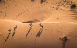 Africa safari Namibia Botswana